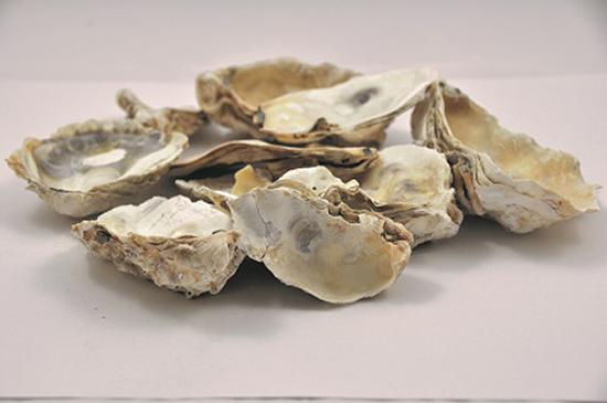 recycler nos coquilles d'huîtres